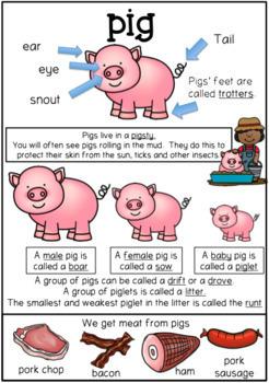 Pig Worksheets Farm Theme English Language Arts & Mathematics