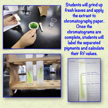 Leaf Pigment Chromatography Lab