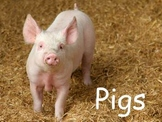 "Pigs Nonfiction PowerPoint ""Book"" for First Grade (easier)"