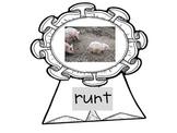 Pigs~Charlotte's Web