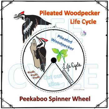 Pileated Woodpecker (Life Cycle Spinner)