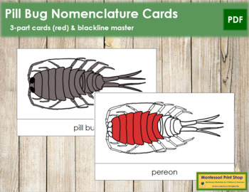 Pill Bug Nomenclature Cards (Red)
