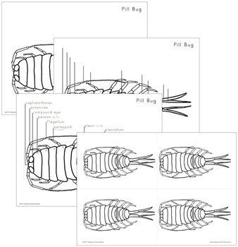 Pill Bug Nomenclature - Elementary