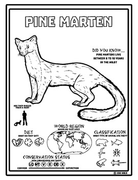 Pine Marten -- 10 Resources -- Coloring Pages, Reading & Activities