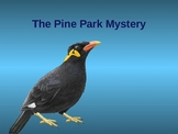 Pine Park Mystery Power Point