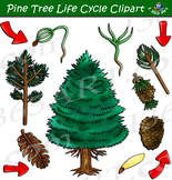 Pine Tree Life Cycle Clipart