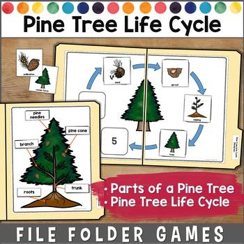 Pine Tree Life Cycle File Folder Games