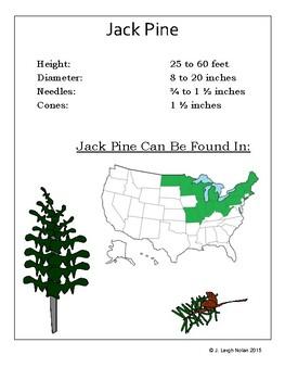 Pine Tree Measurement Packet