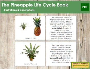 Pineapple Life Cycle Book