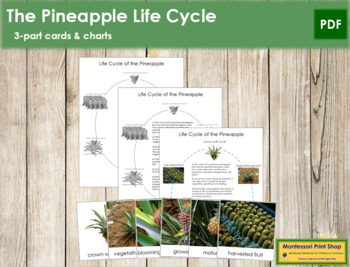 Pineapple Life Cycle Cards and Charts