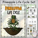 Pineapple Life Cycle Set