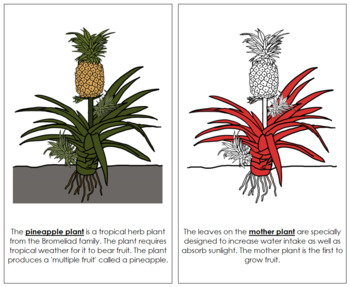 Pineapple Plant Nomenclature Book - Red