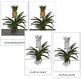 Pineapple Plant Nomenclature Cards