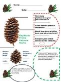 Pinecone Activity