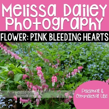 Pink Bleeding Hearts Photograph