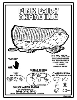 Pink Fairy Armadillo -- 10 Resources -- Coloring Pages, Reading & Activities