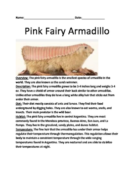 Pink Fairy Armadillo - Informational article facts information questions