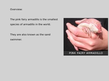 Pink Fairy Armadillo - Power Point - Information Facts Pictures