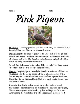 Pink Pigeon - endangered vulnerable species lesson facts information questions