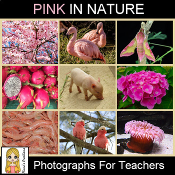 Pink in Nature Photograph Pack