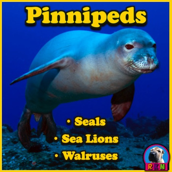 Seals, Sea Lions, and Walruses: Pinnipeds - PowerPoint & A