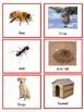 Places Animals live
