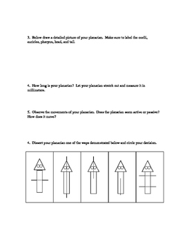 Planarian Lab