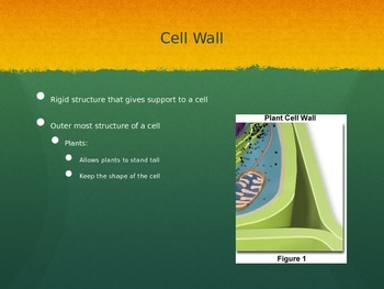 Planet and Animal Cell