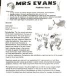 Plankton Races