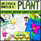 Plant Activities   Crafts   Anchor Chart BUNDLE