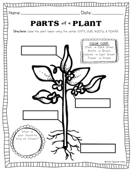 plant activities k 2 by the teacher wife teachers pay teachers. Black Bedroom Furniture Sets. Home Design Ideas