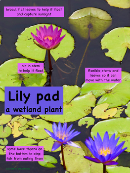 Plant Adaptation Posters