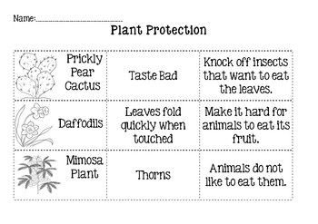 Plant Adaptation (Protection) Cut and Paste
