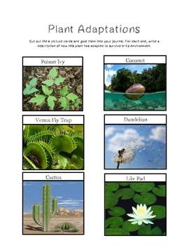 Plant Adaptation Sort