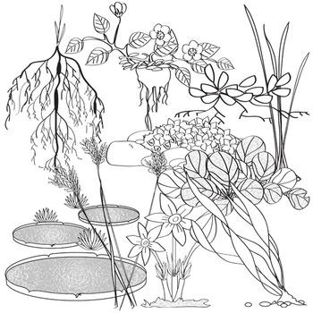 Plant Adaptations Clip Art Set # 2
