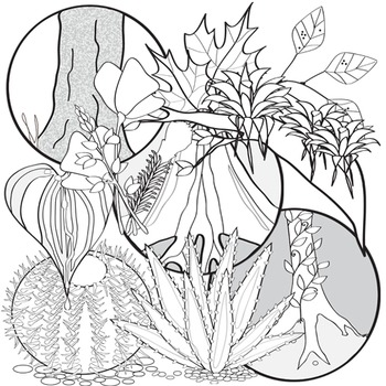 Plant Adaptations Clip Art Set # 1