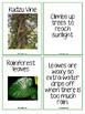 Plant Adaptations Matching Game