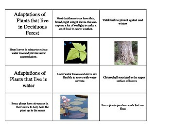Plant Adaptations in Different Ecosystems
