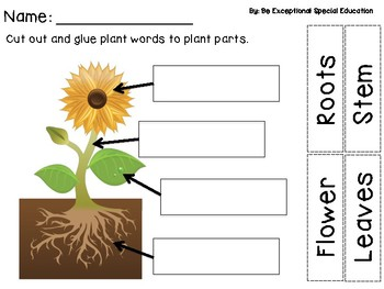 Plant Adapted Book and Activities