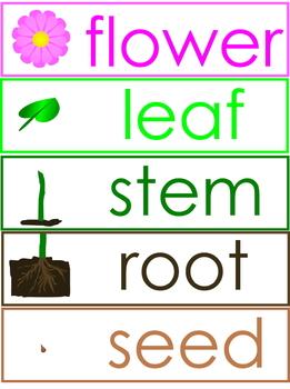 Plant Anatomy Labels