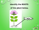 Plant Anatomy PowerPoint Game!