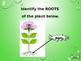 Plant Anatomy PowerPoint Game!