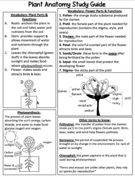 Plant & Flower Anatomy Study Packet & Assessments
