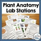 Plant Anatomy & Plant Adaptations Lab Stations