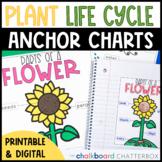 Plant Anchor Charts   Google Slides