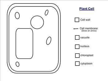 Plant And Animal Cell Diagram
