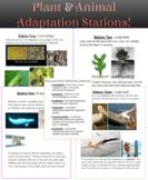 Plant & Animal Adaptation Stations