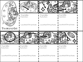 Plant & Animal Cell Comparison Booklet