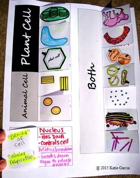 Plant & Animal Cell CFU Activities & Foldable