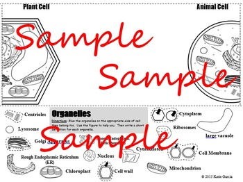 Plant & Animal Cell Comparison Side by Side